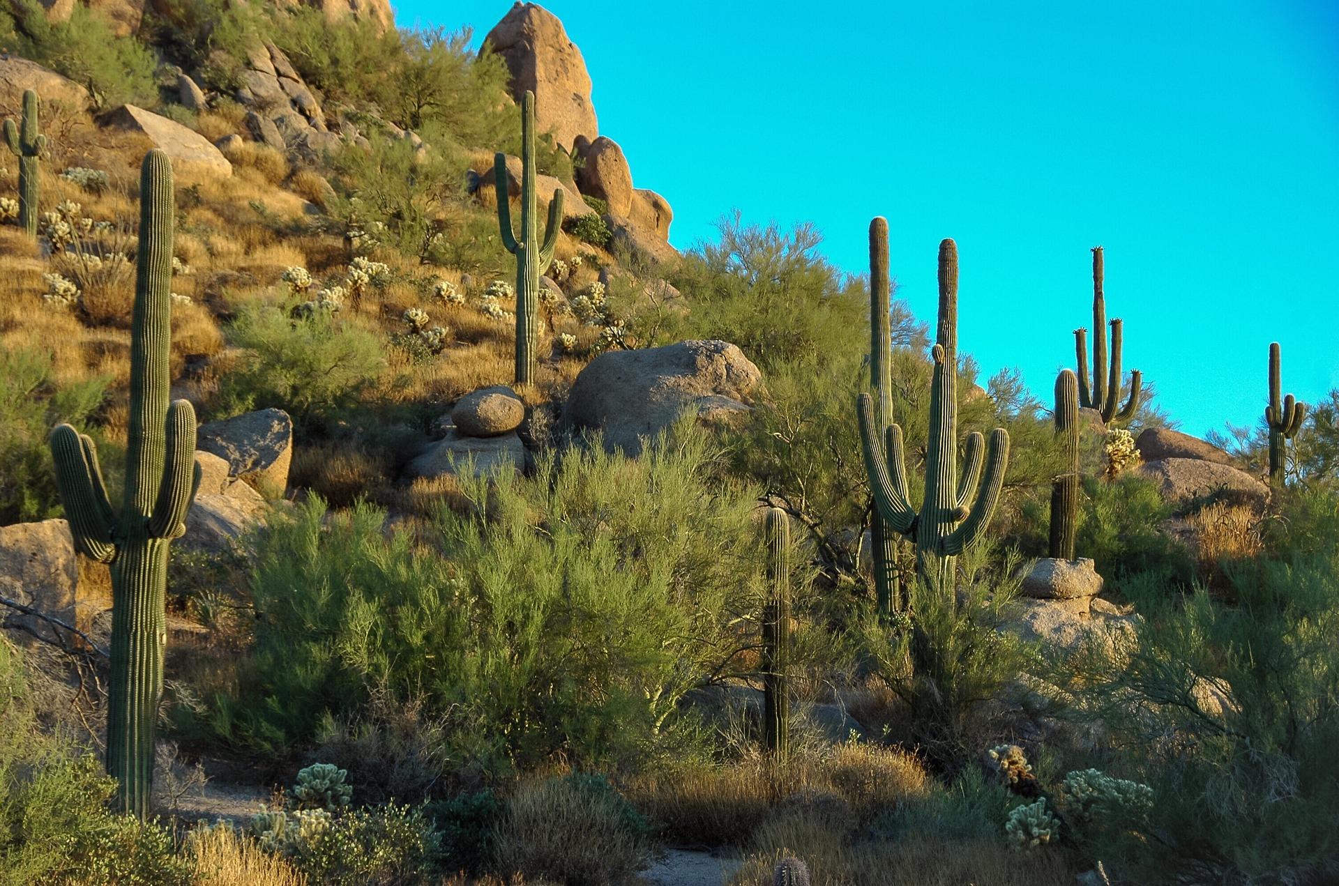 Scottsdale Arizona assisted living
